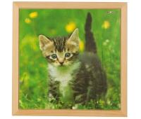 [Puzzle - fotky mláďat - Mačiatko (49 dielikov)]
