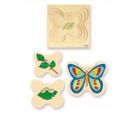 [Motýľ]