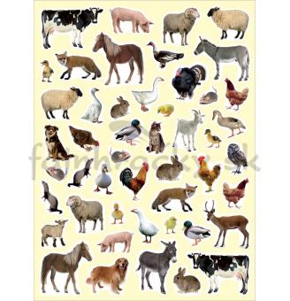 Nálepky - Domáce zvieratká