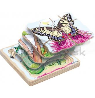 Vývojové štádiá - motýlik